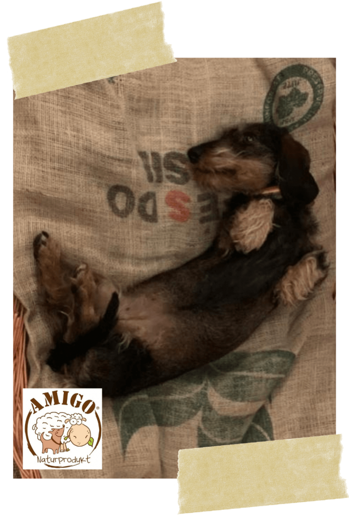 hundetraining-hundeschule-online-amigo-naturprodukt-belinda-schopper-welpe-vollzeit4beiner-kerstin-quast