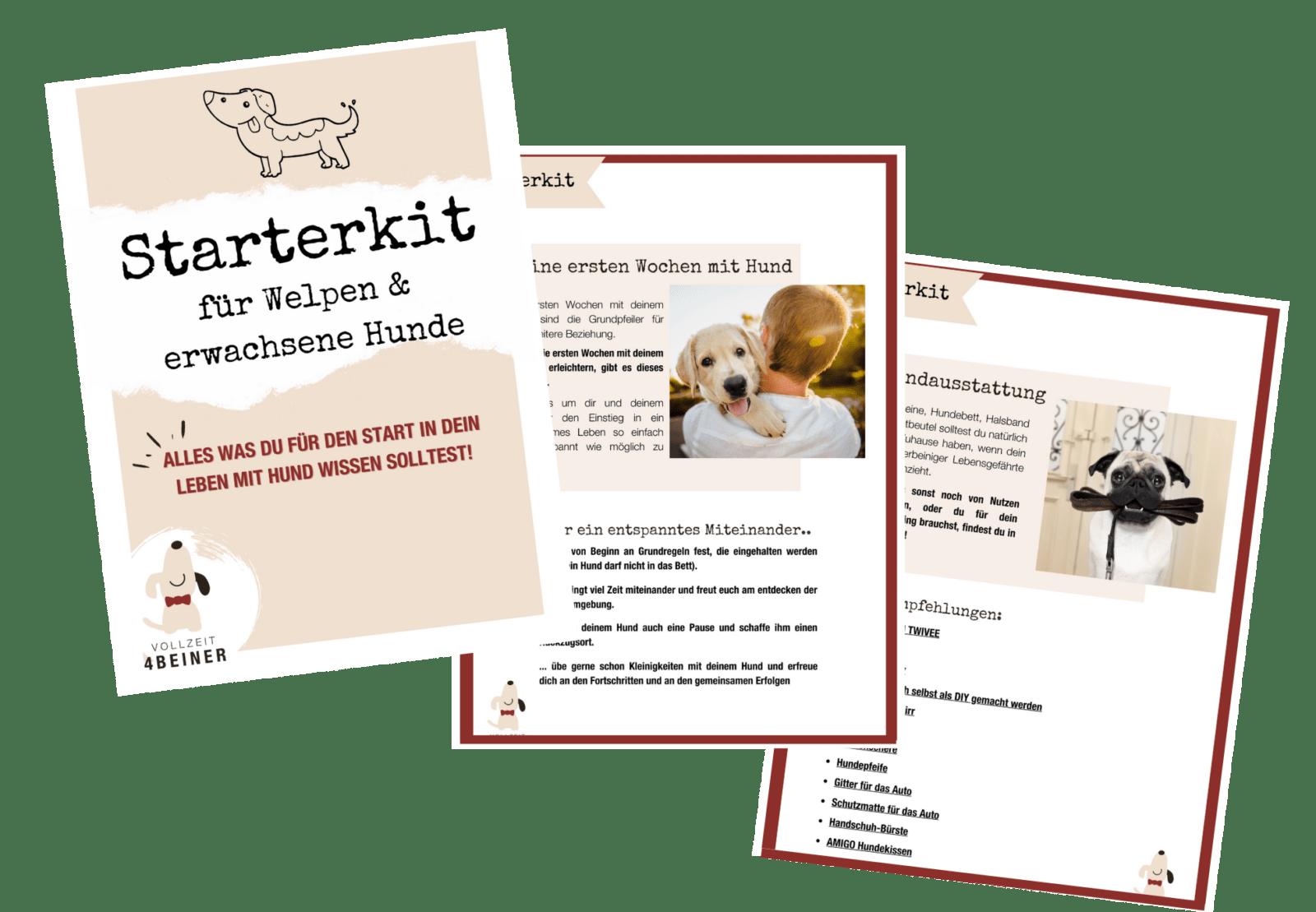 starterkit-welpen-gratis-kostenlos-hunde-hundeschule
