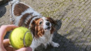 frustrationstoleranz-beim-hund-tipps-uebungen-erlenen-hundeschule-vollzeit4beiner-berufstaetig