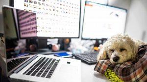 5-tipps-fuer-buerohunde-hund-buero-office-dog