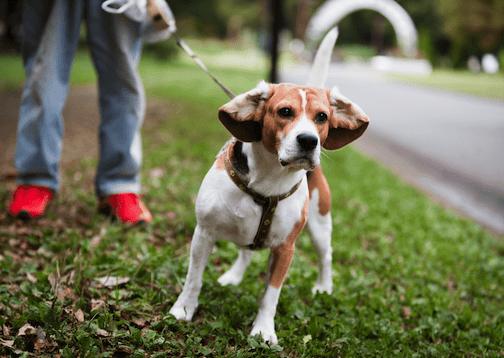hundebegegnungen-tipps-hund-einfach-alltag-hundetraining