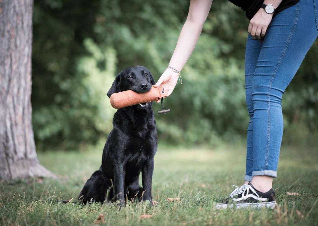 work-dog-balance-online-kurs-hund-hunde.1